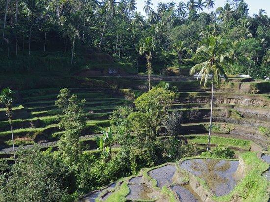 Tegalalang Rice Terrace: カフェのテラスから