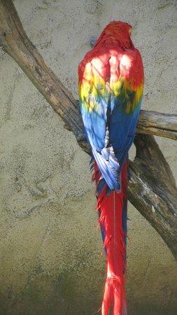 Le Jardin Aux Oiseaux : zoo d'Upie