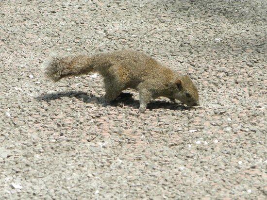 Machida Squirrel Garden: 町田リス園の写真その1