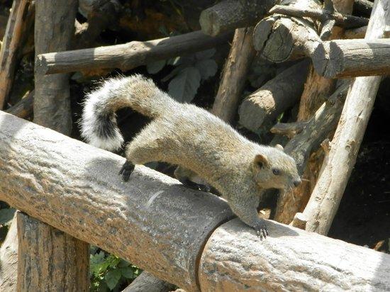 Machida Squirrel Garden: 町田リス園の写真その3