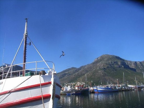 Hout Bay Backpackers: Boats at Harbour