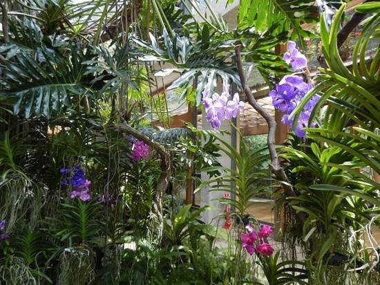 Nishiizu-cho, Japan: Orquideas raras
