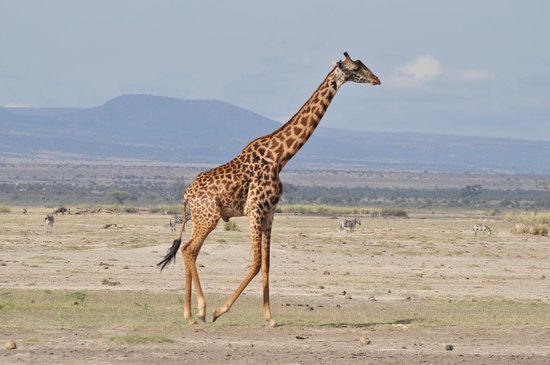 Ombretta Tours & Safaris - Day Tours : Kenya