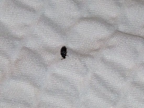 SpringHill Suites Arundel Mills BWI Airport: Bug on Bed