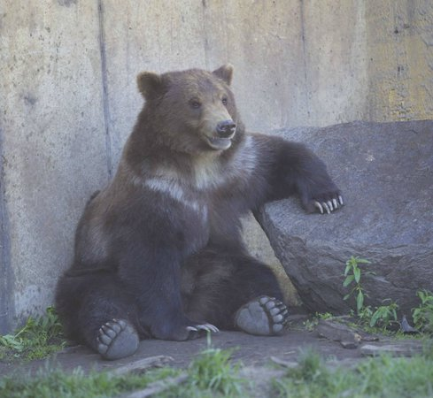 Montana Grizzly Encounter: Lucy