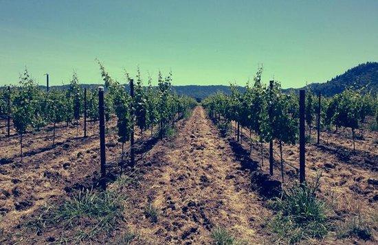 Riversdale Valley Farm : Driveway