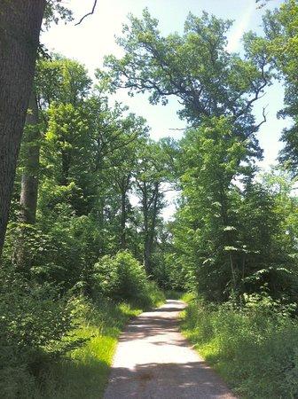 Waldhotel Sulzbachtal: A walking trail nearby