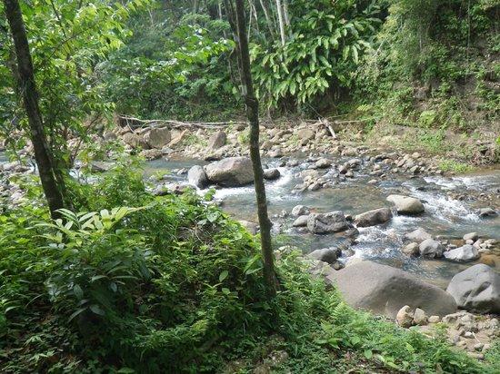 ATV Paradise Tours: The stream