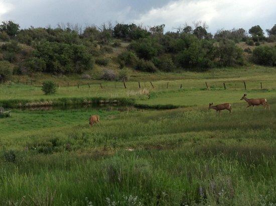 Blue Lake Ranch: Morning visitors