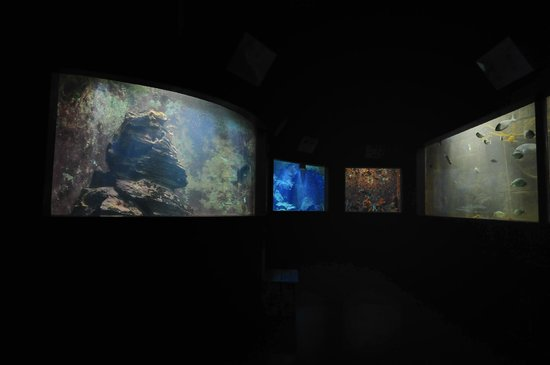 Acquario Marino: internal view