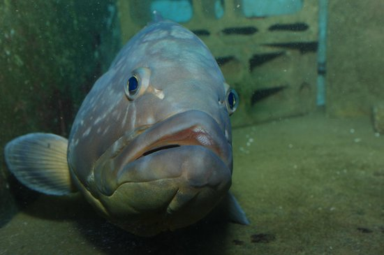 Acquario Marino: a fish
