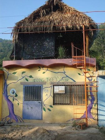 La Manzanilla, Mexico: Welcome to Bending Tree Yoga and Healing Center
