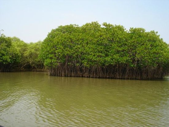 Pichavaram Mangrove Forest : Taken in Boat ride