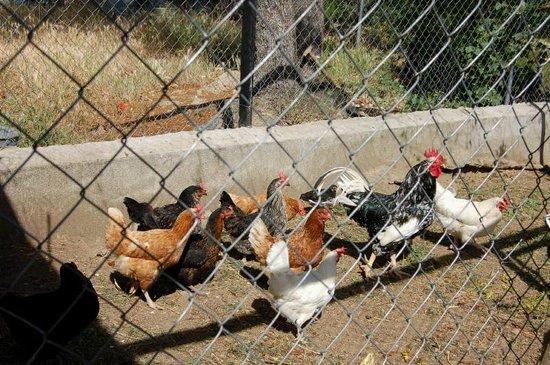 El Hotelito: Breakfast eggs straight from star chickens
