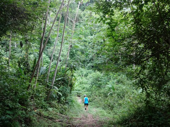 Star Mountain Jungle Lodge: Jungle trail hike