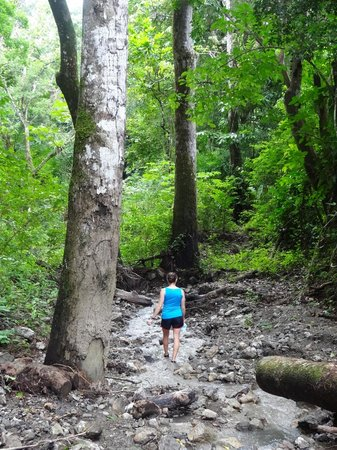Star Mountain Jungle Lodge: A stream along our jungle hike