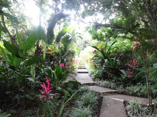 Star Mountain Jungle Lodge: The path leading to our room