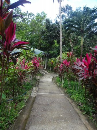 Star Mountain Jungle Lodge: The path from our room to the b-fast pavillion