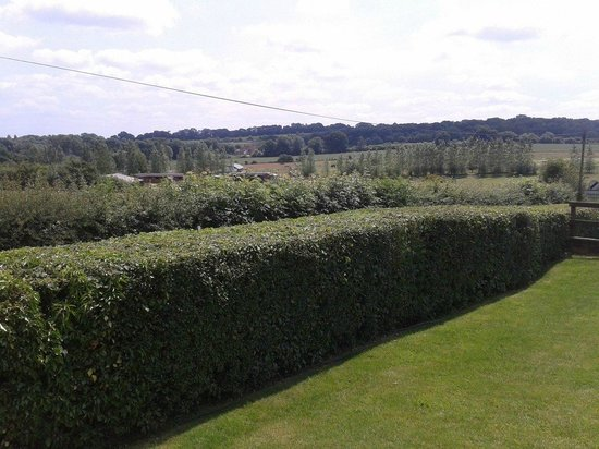 The Fox: View from the Garden