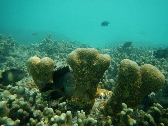 The Sun Siyam Iru Fushi Maldives: Snorkelling