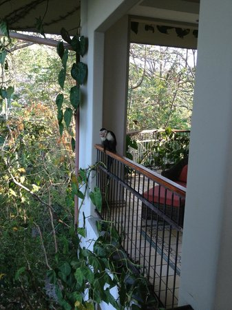 Arenas del Mar Beachfront & Rainforest Resort: Monkey on the patio