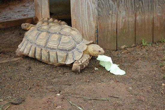 Circle G Ranch: Wild Animal Park & Camel Safari: Turtle
