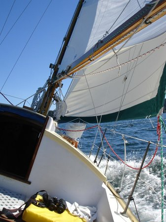Northwest Classic Daysailing: Sailing on Aura