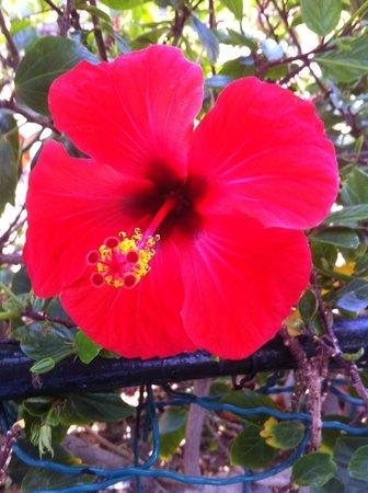 Portonovo Apartments: Flower in Puerto Mogan