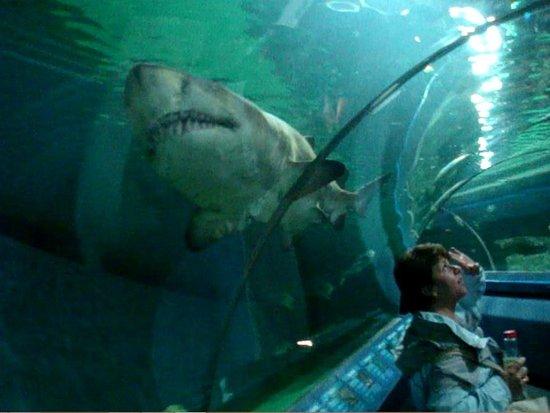 shark tunnel picture of blue planet aquarium ellesmere. Black Bedroom Furniture Sets. Home Design Ideas
