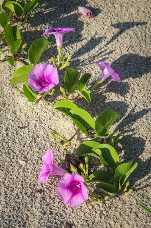 flowers on the beach nearby