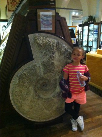 Whitby Museum: A large fossil - although nowhere near the largest!!