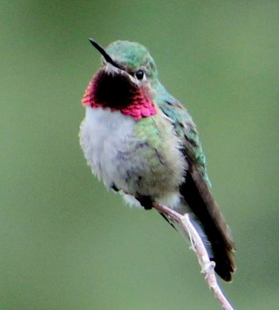 McGregor Mountain Lodge: Numerous hummingbirds