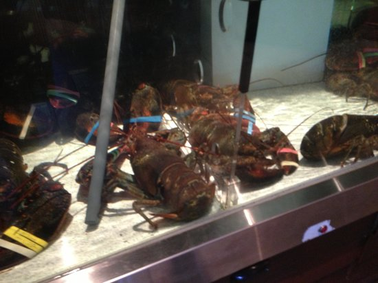 Red Lobster: Lobster tank