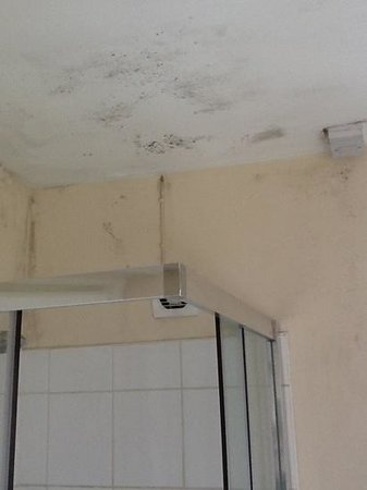 Paddy's Palace Derry: Black mold in the bathrooms