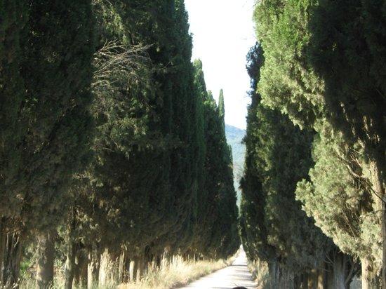 Viale di cipressi vicino al casolare