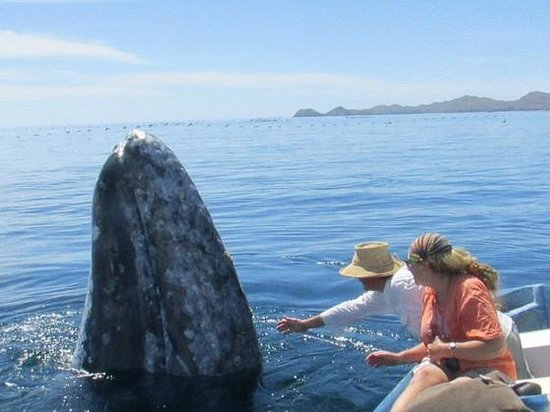 Magdalena Bay Whales Puerto San Carlos Mexico Address