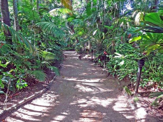Kewarra Beach Resort & Spa: Path from cabin to reception
