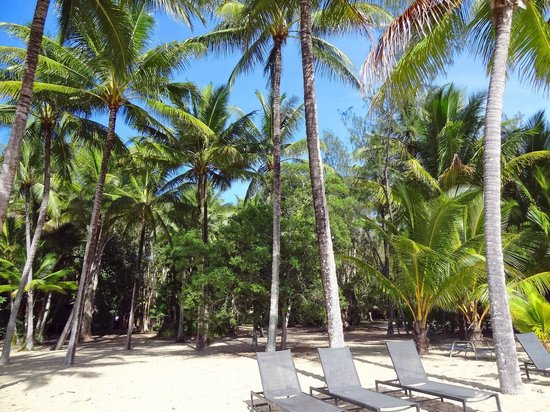 Kewarra Beach Resort & Spa: View from the beach to the hotel