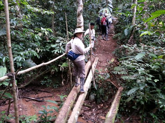 Refugio Amazonas: hiking through the jungle