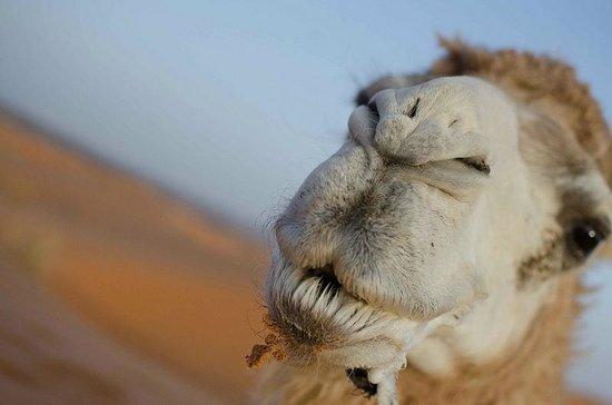 Ali & Sara's Desert Palace: My camel