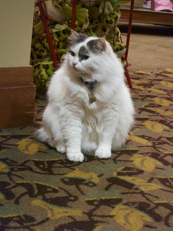 Alderbrook Resort & Spa: Resident Cat
