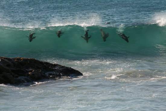 Discovery Tours - Day Tours : Seals giving us a show!