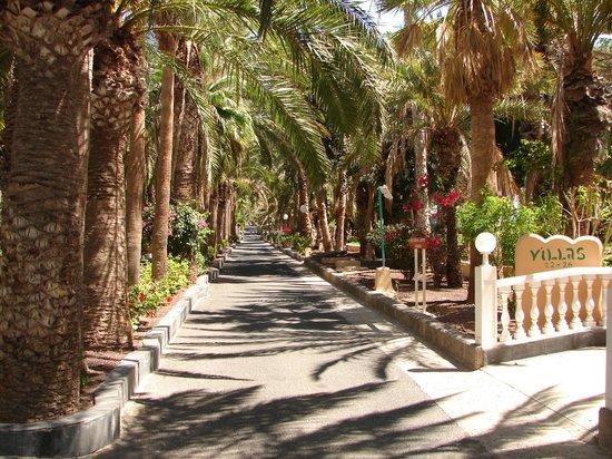 Apartamentos Stella Jandia : Allée principale dans la palmeraie
