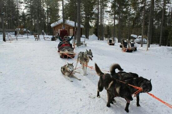 Lapland Safaris: our husky ride in lapland