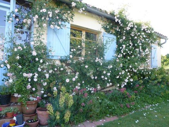 Castelsagrat, France: roses around the house