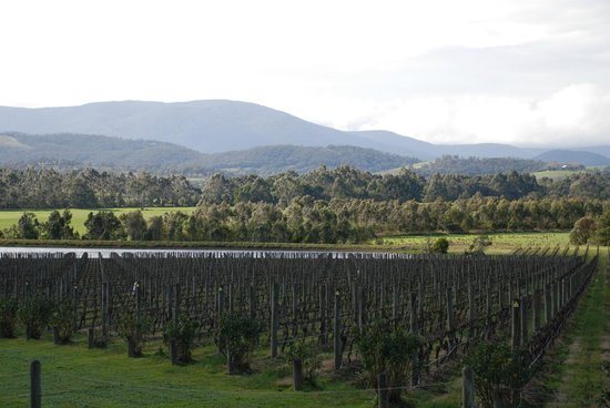 Domaine Chandon: View from the bar/restaurant