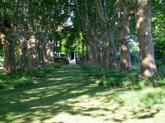 Manoir des Sources : wunderschöne Platanen führen zum Eingang