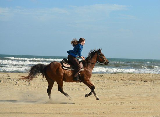 Equine Adventures: with Romeo on the beach!