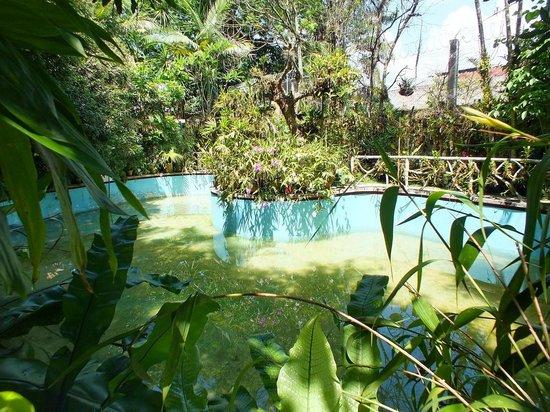 Jardin 2 picture of museo jardin de orquideas coatepec for Jardines de orquideas