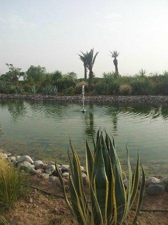 ClubHotel Riu Tikida Palmeraie: Pond